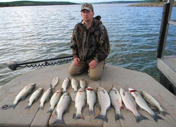 Oklahoma fishing pictures oklahoma fishing report ok for Keystone lake fishing report